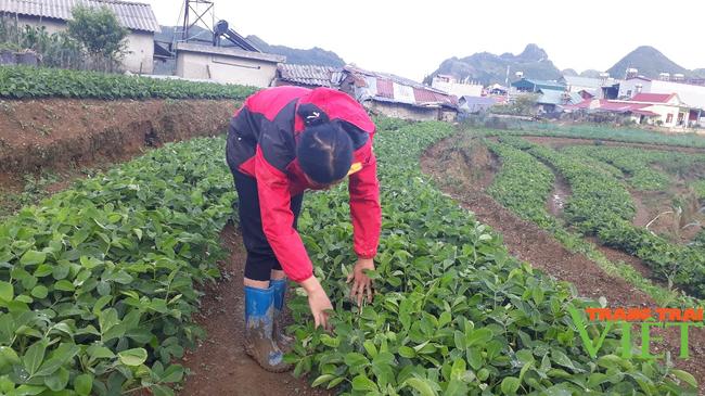 Sìn Hồ phát triển sản xuất nông nghiệp theo hướng hàng hóa - Ảnh 1.