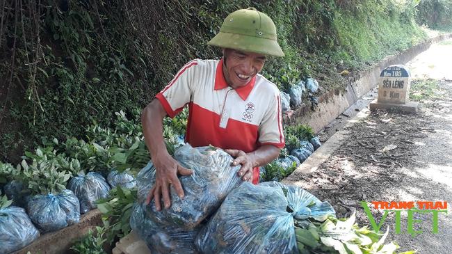 Sìn Hồ phát triển sản xuất nông nghiệp theo hướng hàng hóa - Ảnh 2.