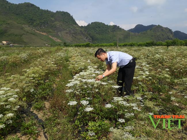 Sìn Hồ phát triển sản xuất nông nghiệp theo hướng hàng hóa - Ảnh 3.