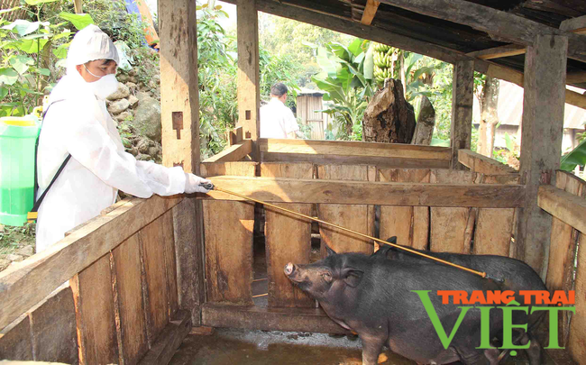 Điện Biên: Phòng, chống dịch bệnh trên gia súc, gia cầm   - Ảnh 1.