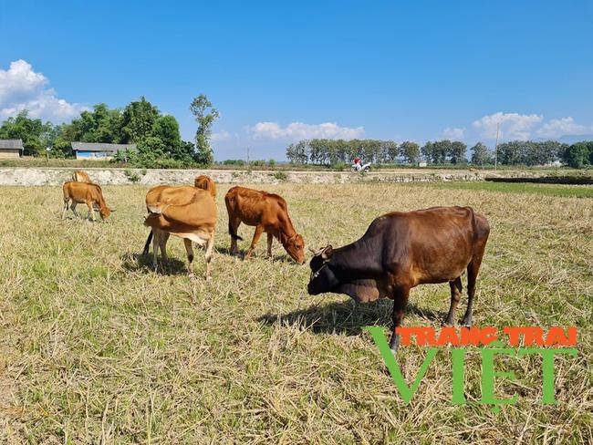 Điện Biên: Phòng, chống dịch bệnh trên gia súc, gia cầm   - Ảnh 3.