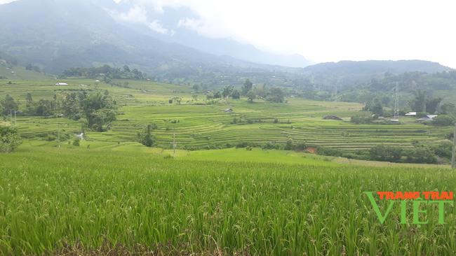 Tam Đường phát triển sản xuất nông nghiệp hàng hóa - Ảnh 1.