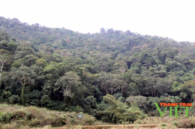 Tân Uyên tăng cường công tác quản lý, bảo vệ rừng - Ảnh 1.