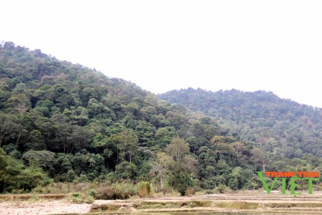 Tân Uyên tăng cường công tác quản lý, bảo vệ rừng - Ảnh 3.