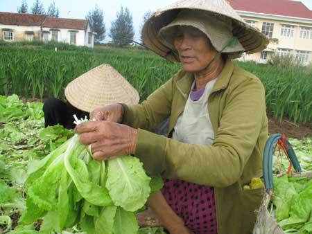 Những người nông dân làng rau Ngọc Phước buồn vì giá rau quá rẻ.