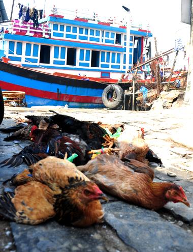 Hương vị tết của ngư dân miền Trung hành nghề trên biển là vài con gà, đầy đủ bánh tét, củ kiệu, thịt heo...