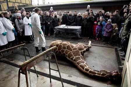 Đám đông người chứng kiến ảnh tượng con hươu bị giết hại