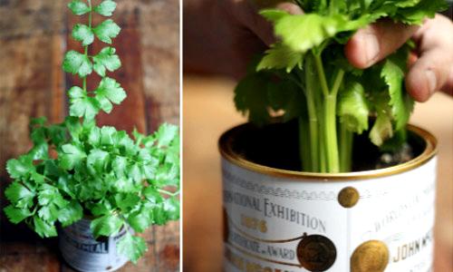 """Kiểu trồng rau """"Thạch Sanh"""" đang được áp dụng một cách rộng rãi"""