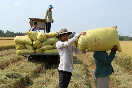 Nhiều ngân hàng đang triển khai các giải pháp để khơi thông nguồn tín dụng cho nông nghiệp, nông thôn.