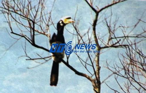 Chim phượng hoàng đất ở Tràng An