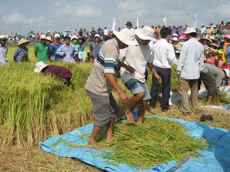 Tranh tài cuộc thi gặt lúa truyền thống.