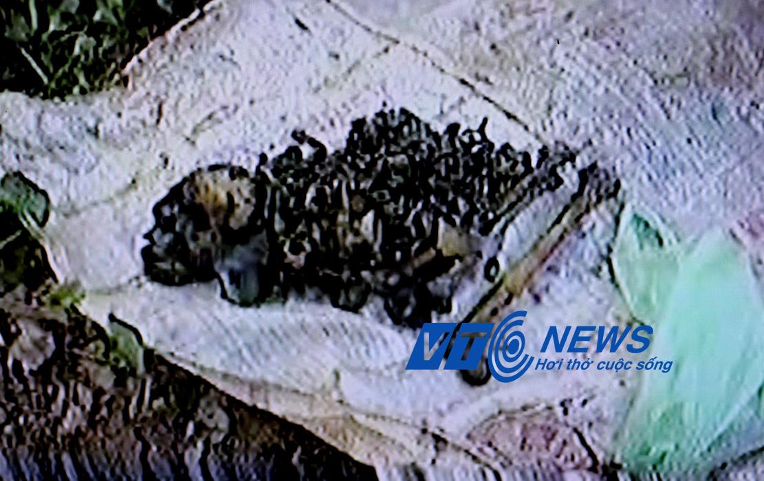Hình ảnh xương cốt đào được ở cửa hang Luồn (Ảnh cắt từ clip)
