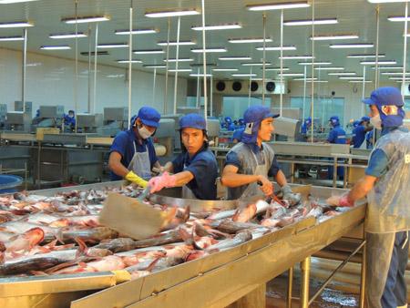 Doanh nghiệp chế biến, xuất khẩu cá tra ở TP. Cần Thơ.