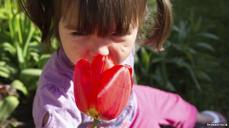 Một bông hoa có vị ngọt ngào là do sự kết hợp hài hòa của hàng trăm mùi khác nhau