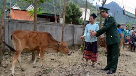 Thượng tá Lê Như Cương - Phó chủ nhiệm Chính trị BĐBP Nghệ An - trao bò cho gia đình bà Vi Thị Châu ở Làng Xiềng, xã Môn Sơn, huyện Con Cuông. (Nguồn: Dân trí)