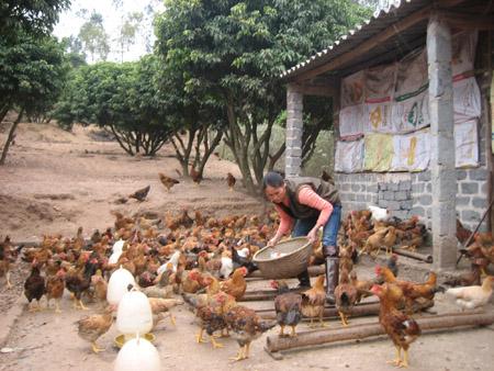 Nông dân sản xuất nhỏ rất cần được hỗ trợ trong liên kết nhóm, HTX…
