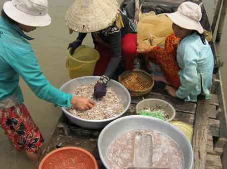 Cá mờm và cá cơm được ướp đá lạnh ngay khi đưa lên xuồng lưới, nhờ vậy cá đến tay người tiêu dùng vẫn tươi ngon