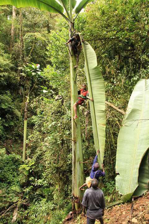 148706642920625-giant-banana-2-facebook