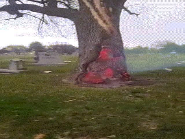 Kì lạ gốc cây cháy ruột không cháy vỏ trong nghĩa trang Mỹ