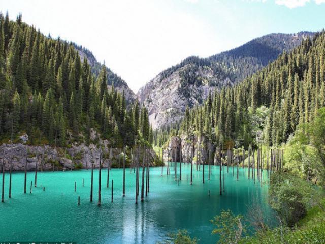 Lạ kỳ, khu rừng ẩn mình dưới hồ nước xanh như ngọc