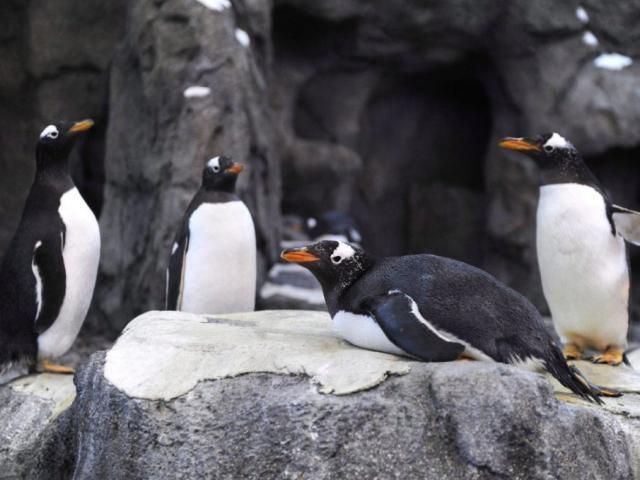 Quốc gia đang lạnh đến nỗi chim cánh cụt cũng không sống nổi