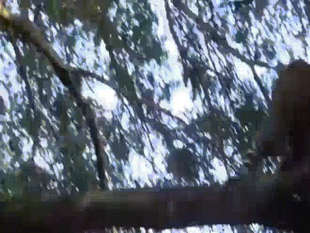 Báo gấm săn khỉ đầu chó, không ngờ bị truy sát ngược