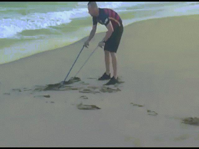 Chạy bộ trên bãi biển, thót tim khi phát hiện sinh vật kịch độc
