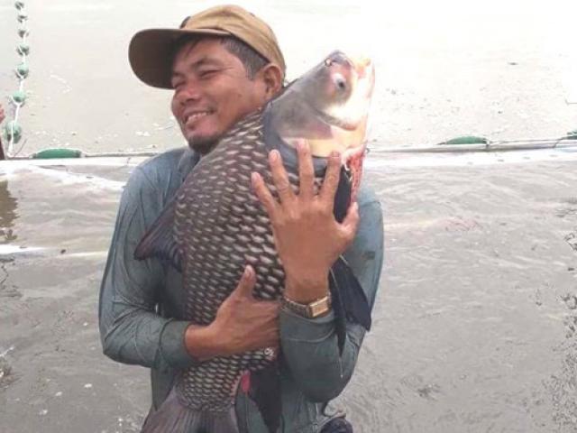 Ông Nguyễn Văn Bình nuôi loài cá suýt tuyệt chủng, thành tỷ phú