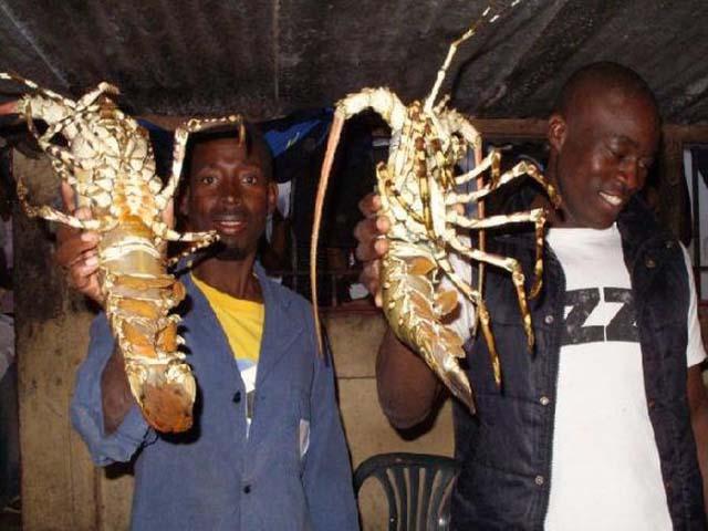Người châu Phi ăn tôm hùm thay cơm, biết được lý do ai nấy đều sốc