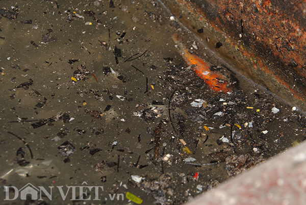 Thậm chí, nhiều chú cá chưa kịp chở ông Táo về trời, thì đã chết ngửa giữa đống tro rác.