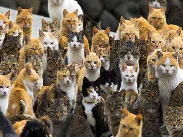 """Hòn đảo nơi mèo thống trị, số lượng """"boss"""" nhiều gấp 6 lần con người"""
