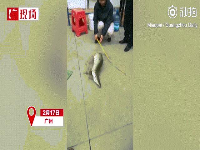 """Thủy quái """"nửa rắn nửa rùa"""" xuất hiện ở hồ Trung Quốc"""