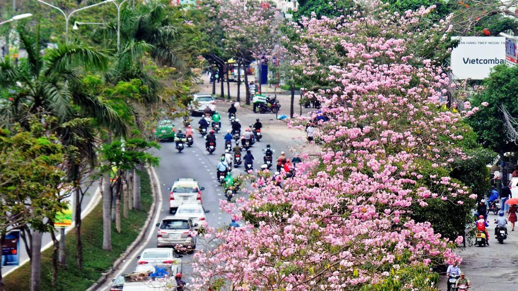 """Không ngờ giữa Sài Gòn lại có """"thiên đường"""" hoa kèn hồng đẹp như thế này"""