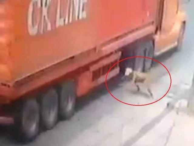 Vụ người đàn ông lao vào gầm xe container: Tài xế bật khóc khi xuống xe