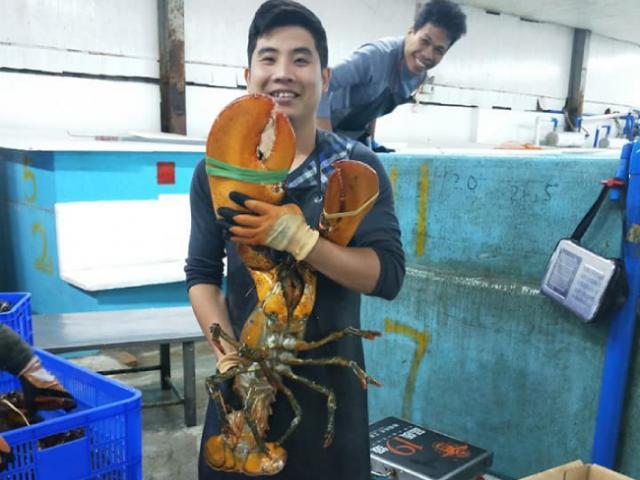 Nhà giàu Việt chi cả chục triệu đồng mua tôm khổng lồ về ăn