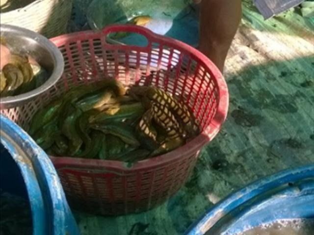 Cuối năm bắt bán 20 tấn cá trê vàng, thu 800 triệu đồng, cả làng khen