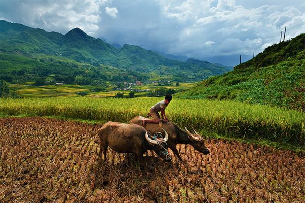 Cuộc sống thường ngày của những người dân nơi đây được lột tả qua hình ảnh một chú bé chăn trâu.