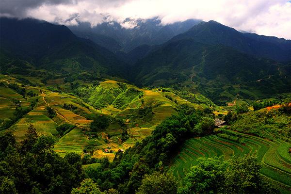 Màu vàng ươm của lúa chín xen kẽ với màu xanh của núi rừng mang lại cho Sapa một cảnh tượng đẹp như tranh vẽ.