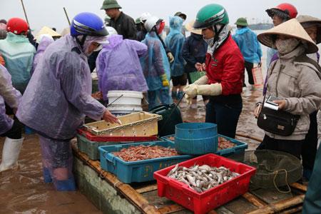 Hải sản ở bến Giao Hải chủ yếu là các loại mực, tôm biển, ghẹ, bề bề,  cá bơn, cá đuối,...