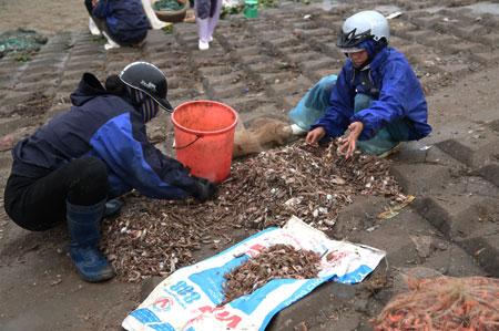 Bắt đầu phân loại cá, tôm, mực để đưa về chợ bán.