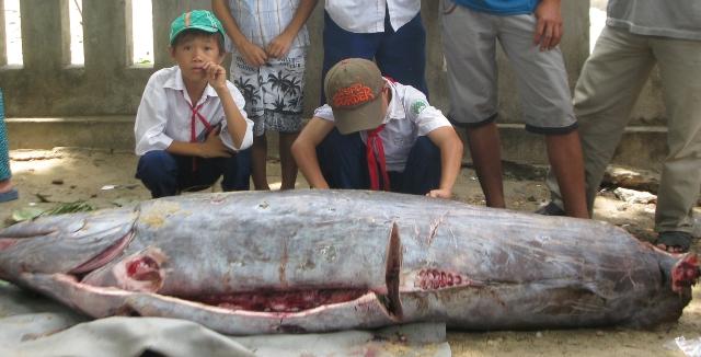 Con cá lạ nặng trên 200kg.