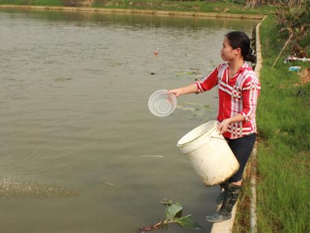Chị Thu (vợ anh Kiên) cho cá ăn.