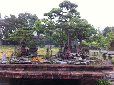 Cây trong vườn của cầu thủ Đức Dương (ảnh do nhân vật cung cấp).