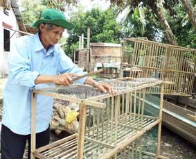 Ông Tời tự tay đóng chuồng nuôi bồ câu để tiết kiệm chi phí. (Nguồn ảnh: Báo Cần Thơ)