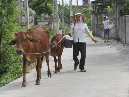 Đường làng, ngõ xóm khang trang tại xã NTM Đông Phương, huyện Đông Hưng (Thái Bình).