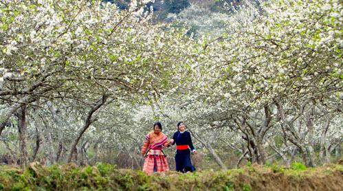 Tây Bắc mùa Xuân (Nguồn ảnh: Internet)