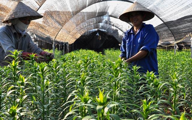 Nhiều mô hình sản xuất đã hình thành đem lại thu nhập cao cho người dân trong quá trình xây dựng NTM  (ảnh, người dân ở quận Bắc Từ Liêm, Hà Nội trồng hoa cho thu nhập cao).