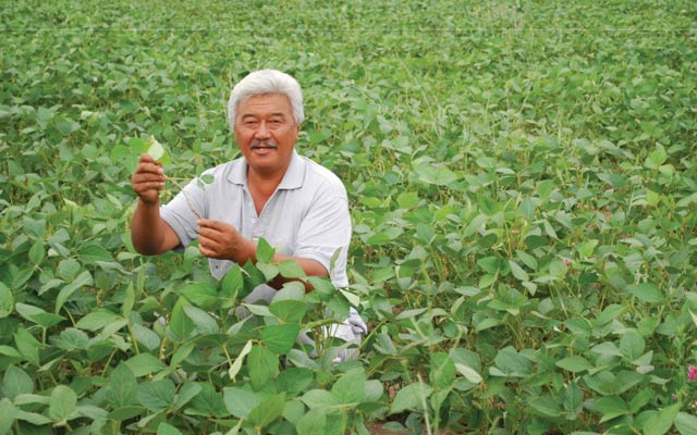 Phân bón Văn Điển  giúp cho cây đậu- lạc tăng năng suất,  ngăn  ngừa dịch bệnh.