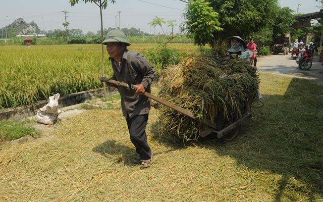 Tốc độ tăng trưởng của lĩnh vực nông nghiệp đang giảm dần (ảnh minh họa).