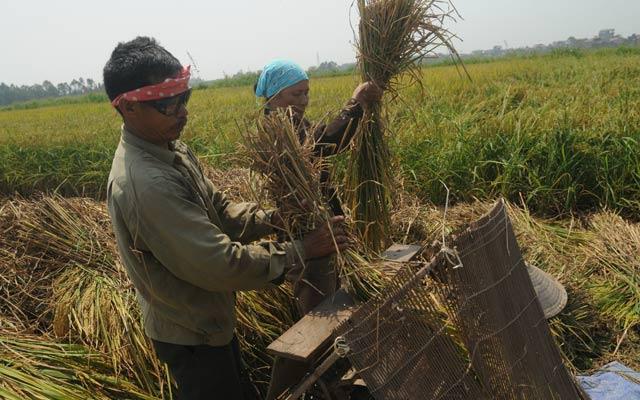 Nông dân vẫn chưa được hỗ trợ tốt nhất để đối mặt rủi ro và phát triển sản xuất.